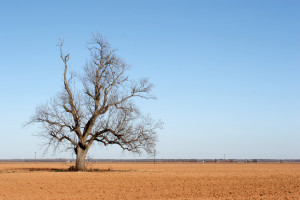 Queensland Government drought assistance