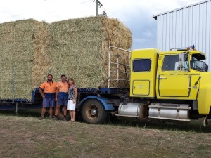 Clarendon's Reck family making hay in all weather